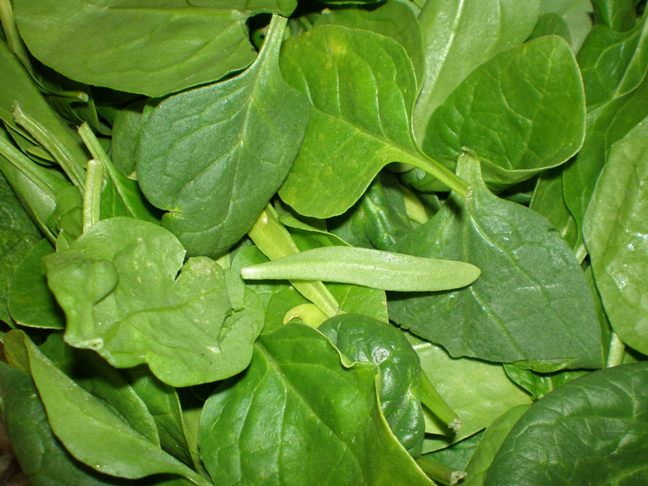 ... salads to go with dinner, I noticed this little leaf in my spinach